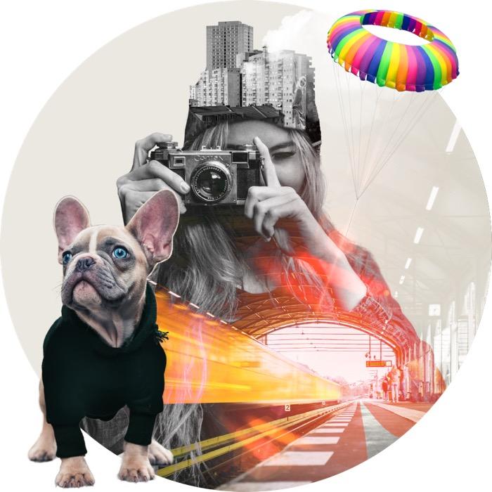 Collage: Frau mit Fotoapparat, Hund et al